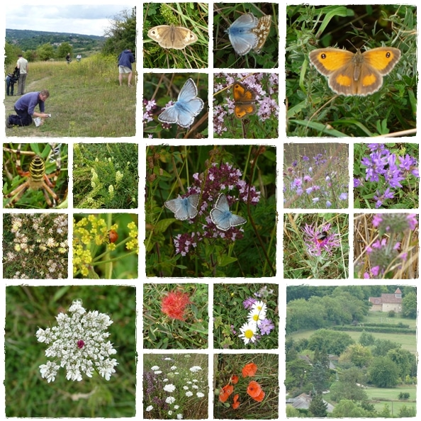 Butterflies and flowers at Magdalen Hill Down Nature Reserve