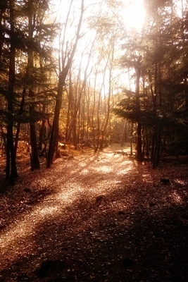 Sunlight in Sepia