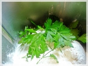 Chopping parsley into my flour for extra flavour