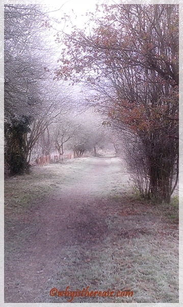 Tongham Wood is a wintery wonderland